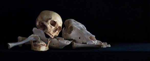 Still Life with Human skull and Animal skull on pile of bone in dark Halloween night