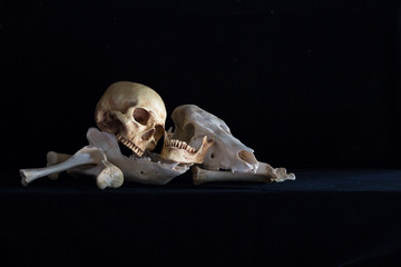 Still Life with Human skull and Animal skull on pile of bone in dark Halloween night