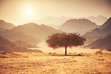 Valley in the desert with an acacia tree with mountain rock and sun