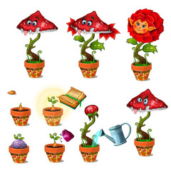 Ripening of friendly red magic flower with human face and toothy carnivorous mushroom. Big vector set of cartoon image isolated on white background