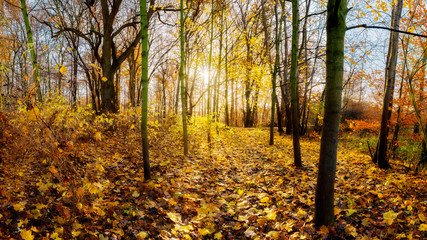 Wonderful autumn forest with bright sun and colorful trees