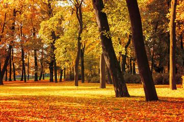 Autumn picturesque landscape - spreading autumn tree with fallen yellow autumn leaves under sunlight