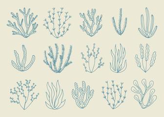 alga vector isolated set. hand drawing