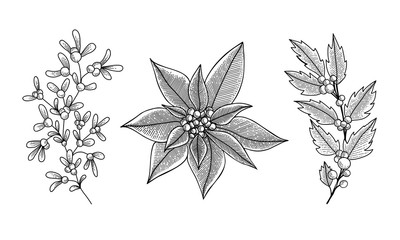 Christmas set wich mistletoe, holly berry, poinsettia. Illustration for greeting cards, invitations, and other projects