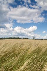 Trawa na polanie, powiewa na wietrze