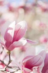 details of tree flowers