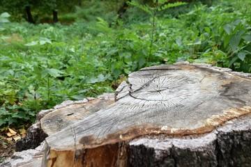 cut tree in the garden