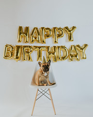 Happy Birthday Balloon Letters and French Bulldog Puppy Wearing a Party Hat