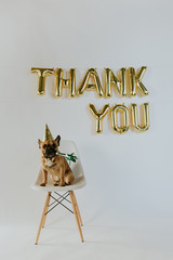 Gold Thank You Balloon Letters and French Bulldog Puppy Wearing a Party Hat