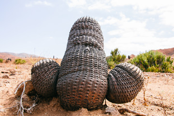 Close-up of cactus in weird and interesting shape