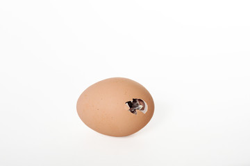 A Chick Hatching From A Brown Egg
