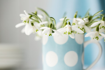 Snowdrop flowers in a cup