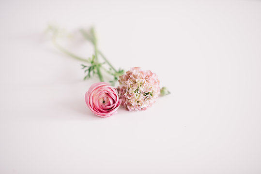 Ranunculus and hydrangeas on a white background