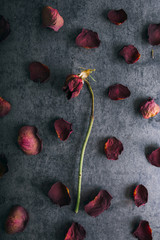 Dry roses against a textured background