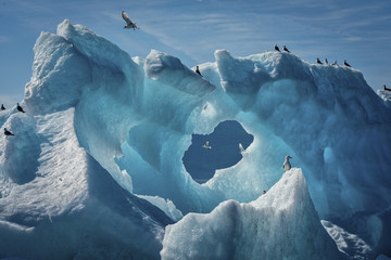 Gulls on Iceberg, Endicott Arm, Alaska