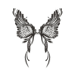 Hand drawn wings,isolated on white background,