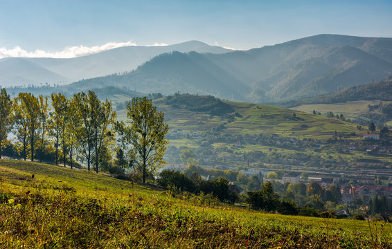 range of poplar trees by the road on hillside. beautiful morning in mountainous countryside