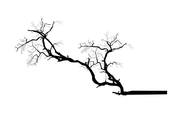 Tree Branch Vector Silhouette - clip-art cartoon vector