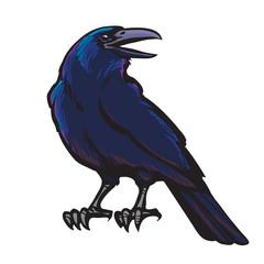 Black crow.