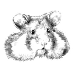 hamster sketch vector graphics head monochrome black-and-white drawing