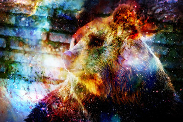 mighty bear in space. Photos with graphic effect. Computer collage. Cosmic space.