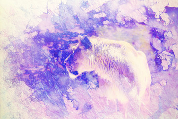 lioness and graphic effect. Computer collage. Marble effect.