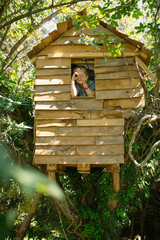 Blonde boy playing at a wooden treehouse