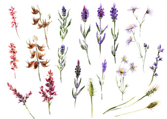Collection romantic watercolor Summer flowers