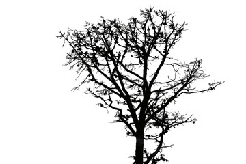 black silhouette of a pine tree on a white background