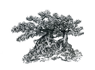 Бонсай с ветвями и листьями.