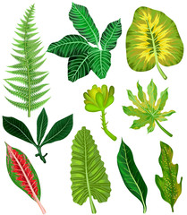 Colorful and exotic set of tropical leaves