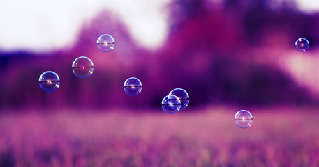 festive background with iridescent soap bubbles flying over a sun-drenched meadow in the purple