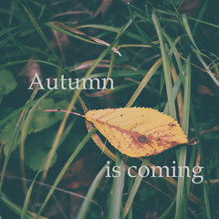 Autumn background and text autumn is coming