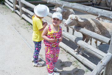 Children, little girls feed sheep and rams through the fence in the zoo.