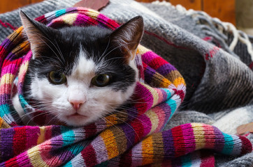 Cat wrapped in a warm scarf.