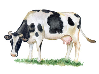 Black and white cow isolated on white background. Watercolor. Illustration. Template.