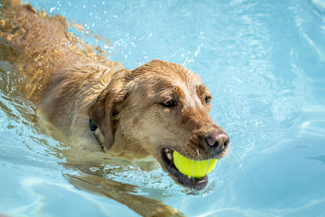 Dogs playing in swimming pool