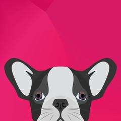 Illustration Dog English bulldog looking over wall