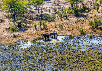 Elephants in a national park near the Victoria falls. The falls and the surrounding area is the National Parks and World Heritage Site - Zambia
