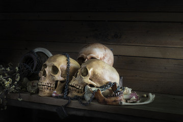 Still life photography with human skulls and bone  attached to  rusty chain on  the wooden table.