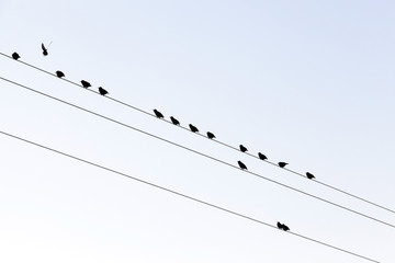 a few birds on the lines of high-voltage poles