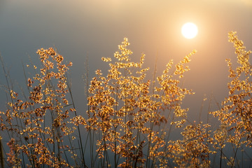 Flower grass with sunlight.