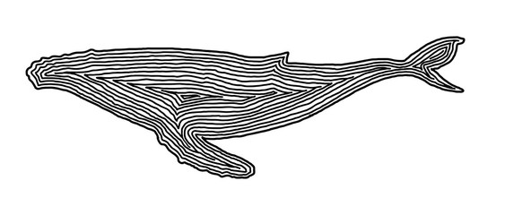 A whale illustration icon in black offset line. Fingerprint style for logo or background.