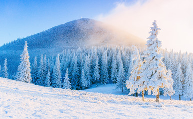 Mysterious winter landscape majestic mountains in winter. Magical winter snow covered tree. Winter road in the mountains. In anticipation of the holiday. Dramatic wintry scene. Carpathian. Ukraine.