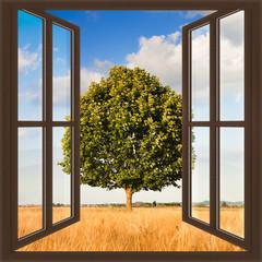 Pojedyncze drzewo w Toskanii widok pola pszenicy z okna - koncepcja obrazu