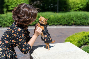 Small dog chihuahua in woman hands. Stylish woman with puppy outdoors in park. Togetherness. Friendship.