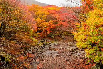 Autumn color in Naejangsan national park, South korea