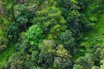 Aerial view of rain forest, Medan, Indonesia.