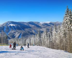 Pine on a mountain slope.Beautiful blue sky.
