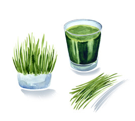 vitgrass or wheatgrass, wheat sprouts juice, green coctail, watercolor illustration